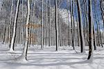 Forest in Winter, Spessart, Bavaria, Germany    Stock Photo - Premium Royalty-Free, Artist: Raimund Linke, Code: 600-02691465