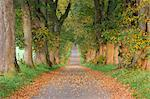 Tree-Lined Path, Bavaria, Germany    Stock Photo - Premium Royalty-Free, Artist: Martin Ruegner, Code: 600-02693533