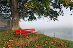 Bench and Lime Tree, Switzerland    Stock Photo - Premium Royalty-Free, Artist: Martin Ruegner, Code: 600-02693539
