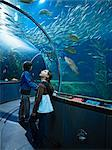 Children, Aquarium of the Bay, San Francisco, California, USA    Stock Photo - Premium Rights-Managed, Artist: Matthew Plexman, Code: 700-02702620
