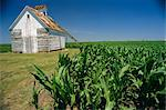 Corn barn, Hudson, Illinois, Mid West, United States of America, North America    Stock Photo - Premium Rights-Managed, Artist: Robert Harding Images, Code: 841-02703377