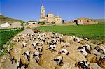 Shepherd and flock of sheep, Castrojeriz, Burgos, Castilla and Leon (Old Castile), Spain, Europe    Stock Photo - Premium Rights-Managed, Artist: Robert Harding Images, Code: 841-02703414