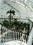 Interior of the Temperate House, restored in 1982, Kew Gardens, UNESCO World Heritage Site, Greater London, England, United Kingdom, Europe    Stock Photo - Premium Rights-Managed, Artist: Robert Harding Images, Code: 841-02703763