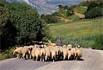 Shepherd on a country road, Castelvetrano, island of Sicily, Italy, Mediterranean, Europe    Stock Photo - Premium Rights-Managed, Artist: Robert Harding Images, Code: 841-02704665