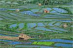 Aerial of rice fields and farm workers at Tirta Gangga, Bali, Indonesia, Southeast Asia, Asia