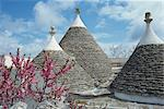 Conical rooftops of trulli near Martina Franca in Puglia, Italy, Europe    Stock Photo - Premium Rights-Managed, Artist: Robert Harding Images, Code: 841-02706565
