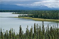 Muskeg, tundra wetland, with lakes and pine forest, Glenallen, Alaska, United States of America (U.S.A.), North America    Stock Photo - Premium Rights-Managednull, Code: 841-02707007