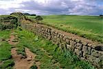 Hadrian's Wall dating from Roman times, looking towards Crag Lough, Northumbria (Northumberland), England, United Kingdom, Europe    Stock Photo - Premium Rights-Managed, Artist: Robert Harding Images, Code: 841-02708516
