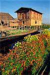 House on stilts, with marigolds, Inle Lake, Myanmar (Burma), Asia    Stock Photo - Premium Rights-Managed, Artist: Robert Harding Images, Code: 841-02709489