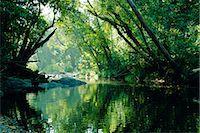 queensland - Rainforest, Cape Tribulation National Park,Queensland, Australia    Stock Photo - Premium Rights-Managednull, Code: 841-02709830