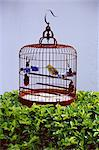 Bird in a cage, Yuen Po Bird Garden, Mong Kok, Kowloon, Hong Kong, China, Asia    Stock Photo - Premium Rights-Managed, Artist: Robert Harding Images, Code: 841-02709867