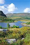 Ring of Kerry between Upper Lake and Muckross Lake, Killarney, County Kerry, Munster, Republic of Ireland (Eire), Europe    Stock Photo - Premium Rights-Managed, Artist: Robert Harding Images, Code: 841-02710359