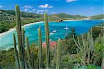 Cactus plants and Bay of St. Jean, St. Barthelemy, Caribbean, West Indies, Central America    Stock Photo - Premium Rights-Managed, Artist: Robert Harding Images, Code: 841-02711625