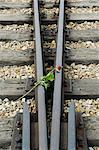 Tributes left to the dead at Auschwitz second concentration camp at Birkenau, UNESCO World Heritage Site, near Krakow (Cracow), Poland, Europe    Stock Photo - Premium Rights-Managed, Artist: Robert Harding Images, Code: 841-02712513