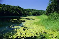 queensland - Barron River, Kuranda, Queensland, Australia, Pacific    Stock Photo - Premium Rights-Managednull, Code: 841-02712748