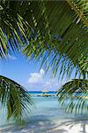 Palm fronds and beach, Rangiroa Atoll, Tuamotu archipelago, French Polynesia, South Pacific Islands, Pacific    Stock Photo - Premium Rights-Managed, Artist: Robert Harding Images, Code: 841-02713971