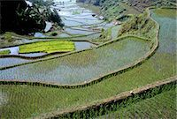 philippine terrace farming - Rice terraces of the Ifugao people,UNESCO World Heritage Site, northern area, island of Luzon, Philippines, Southeast Asia, Asia    Stock Photo - Premium Rights-Managednull, Code: 841-02715492
