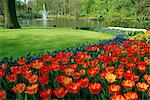 Keukenhof Gardens, Keukenhof, Netherlands    Stock Photo - Premium Rights-Managed, Artist: Robert Harding Images, Code: 841-02716932