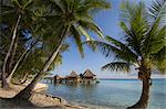 Kia Ora Resort, Rangiroa, Tuamotu Archipelago, French Polynesia, Pacific Islands, Pacific    Stock Photo - Premium Rights-Managed, Artist: Robert Harding Images, Code: 841-02717326
