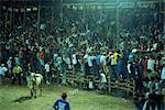 Crowds of Costa Ricans run from mad bull at national fiesta, Santa Cruz bull fights, Costa Rica, Central America    Stock Photo - Premium Rights-Managed, Artist: Robert Harding Images, Code: 841-02718618