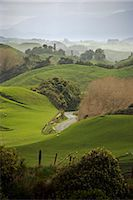Rangiwahia Road, winding through sheep pasture in rural Manawatu, North Island, New Zealand, Pacific    Stock Photo - Premium Rights-Managednull, Code: 841-02718703