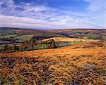 Westerdale from Castleton Rigg, North York Moors National Park, North Yorkshire, England    Stock Photo - Premium Rights-Managed, Artist: Robert Harding Images, Code: 841-02719717