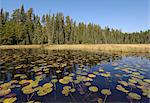 Water lilies on the Frost River, Boundary Waters Canoe Area Wilderness, Superior National Forest, Minnesota, United States of America, North America    Stock Photo - Premium Rights-Managed, Artist: Robert Harding Images, Code: 841-02719768