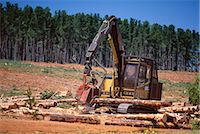 forestry - Logging machinery at fir tree plantation by the Princes Highway, northwest of Gambier, South Australia, Australia, Pacific    Stock Photo - Premium Rights-Managednull, Code: 841-02723009