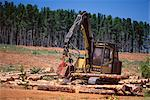 Logging machinery at fir tree plantation by the Princes Highway, northwest of Gambier, South Australia, Australia, Pacific    Stock Photo - Premium Rights-Managed, Artist: Robert Harding Images, Code: 841-02723009
