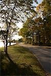 Road in Presqu'ile Provincial PArk, Ontario, Canada    Stock Photo - Premium Rights-Managed, Artist: Derek Shapton, Code: 700-02738091