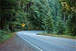 Highway 199 Through Jedediah Smith State Park, Northern California,  California, USA Stock Photo - Premium Royalty-Free, Artist: Matt Brasier, Code: 600-02756987
