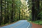 Highway 199 Through Jedediah Smith State Park, Northern California,  California, USA Stock Photo - Premium Royalty-Free, Artist: Matt Brasier, Code: 600-02756990