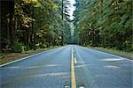Highway 199 Through Jedediah Smith State Park, Northern California,  California, USA Stock Photo - Premium Royalty-Free, Artist: Matt Brasier, Code: 600-02756992