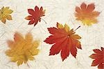 Painting of Maple Leaves Stock Photo - Premium Royalty-Free, Artist: Stellar Stock, Code: 622-02757637