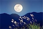 View of Full Moon and Pampas Grass in Night Stock Photo - Premium Royalty-Free, Artist: Alec Pytlowany, Code: 622-02758335