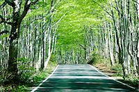 forward - Road Passing Through Beech Forest Stock Photo - Premium Royalty-Freenull, Code: 622-02758723
