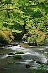 Scenic View of Oirase Stream, Aomori Prefecture, Japan Stock Photo - Premium Royalty-Free, Artist: kwest, Code: 622-02758972