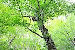 View of Tree and Branches in Aomori Prefecture, Japan Stock Photo - Premium Royalty-Free, Artist: Aflo Relax, Code: 622-02758990
