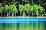 Scenic View of Akan National Park in Hokkaido, Japan Stock Photo - Premium Royalty-Free, Artist: I Dream Stock, Code: 622-02759012
