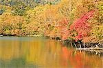 Autumnal Trees Along Lake, Tochigi Prefecture, Japan