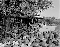 FARMER'S MARKET WITH BUSHEL BASKETS OF FRUITS & VEGETABLES IN FOREGROUND    Stock Photo - Premium Rights-Managednull, Code: 846-02792885
