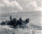 1920s 1930s HORSE-DRAWN WHEAT HARVESTING