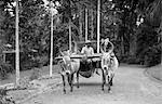 1920s 1930s NATIVE MAN DRIVING WATER BUFFALO CART SINGAPORE