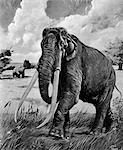 DRAWING OF WOOLY MAMMOTH WITH LONG TUSKS AND TRUNK WITH A BEAR IN BACKGROUND    Stock Photo - Premium Rights-Managed, Artist: ClassicStock, Code: 846-02797936