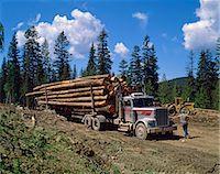 Logging truck, British Columbia, Canada, North America    Stock Photo - Premium Rights-Managednull, Code: 841-02824657