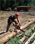 Logging in British Columbia, Canada, North America    Stock Photo - Premium Rights-Managed, Artist: Robert Harding Images, Code: 841-02824659