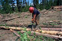 Cutting logs to size for transport, British Columbia, Canada, North America    Stock Photo - Premium Rights-Managednull, Code: 841-02824673