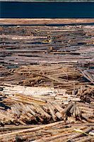 Sorting logs for mill, British Columbia, Canada, North America    Stock Photo - Premium Rights-Managednull, Code: 841-02824679