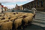 Shepherd leads sheep across street, Mansilla de las Mulas, Leon, Spain, Europe    Stock Photo - Premium Rights-Managed, Artist: Robert Harding Images, Code: 841-02831381