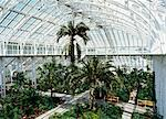 Interior of the Temperate House, restored in 1982, Kew Gardens, UNESCO World Heritage Site, Greater London, England, United Kingdom, Europe    Stock Photo - Premium Rights-Managed, Artist: Robert Harding Images, Code: 841-02832387